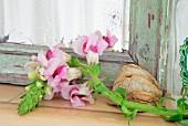 Rosa Löwenmäulchen (Antirrhinum) vor altem Spiegel mit Patina