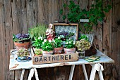 Autumnal arrangement - old wooden crate with antique Jesus figurine and various plants on rustic garden table made from old metal sign and wooden trestles against board wall