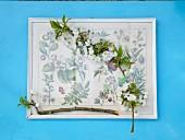 Wildkirschblütenzweige auf Abbildung aus einem altem Pflanzenbestimmungsbuch auf blauem Tisch