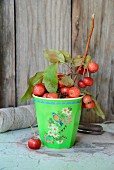 Branch of crab apples in green melamine beaker on patinated table in front of rustic board wall