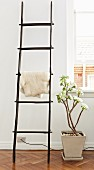 Sheepskin on ornamental ladder and potted succulent in period apartment