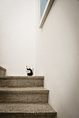 Terrazzo steps with small black animal stencilled on white wall