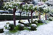 Zart verschneite Gartenlandschaft mit Buchskugeln unter belaubtem Rankgerüst