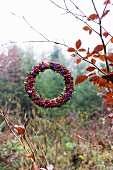 Wreath of red berries and violet sea lavender flowers hanging from autumnal birch branch