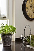 Herbs in grey ceramic pot on black stone worksurface with integrated sink and vintage tap fitting