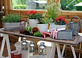 Many planters on rustic table with retro lanterns hanging along edge