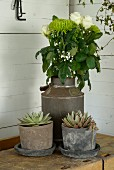 Bouquet of white flowers in vintage milk churn and succulents in rustic clay pots on workbench