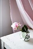 Pfingstrose in Retro Vase auf Tisch, dahinter rosa Vorhang