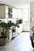 Large house plant next to kitchen counter in open-plan kitchen