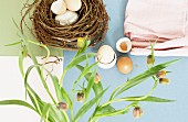 Eggs, eggshells and next on pastel surface below stems of wild tulips