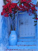 Flowering bougainvillea at the doorway of the blue house in Chefchaouen, Morocco