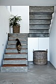 Concrete staircase with wooden treads; wicker basket in front of white fitted cupboards to one side