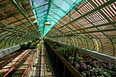 Pattern of light and shade falling through slatted roof structure in long greenhouse