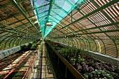 Licht- und Schattenspiel durch die Streben einer Dachkonstruktion in Gewächshausflucht