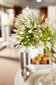 White umbels of flowers on stalks against blurred interior in background