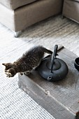 Cat next to teapot on wooden crate