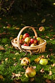 Apple harvest in basket on grass