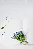 Posy of forget-me-nots lying on open book with blank pages