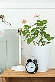 Black, retro alarm clock, geranium in white pot and partially visible, retro table lamp on wooden crate