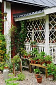 Gravel terrace with potted plants on bench against veranda of small wooden house