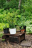 Potted plants on disused wood-fired cooker in garden