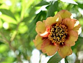 Sonnenbeschienene, gelbe Blüte