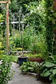 Potted plants on wooden floor in garden