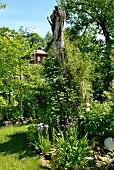 Bed of flowering iris in summery garden
