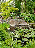 Water lily pond with stone bench on large boulder