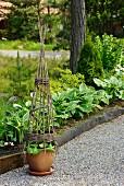 Tontopf mit kegelförmiger, geflochtener Rankhilfe auf Kiesweg im Garten