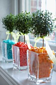 Tiny trees in glass vases of colourful jellybeans