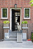 Concrete steps leading to entrance in brick façade with dog sitting in open door