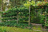 Free-standing espalier trees next to small, gate-shaped trellis