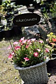 Welcome sign in white basket planted with pink petunias
