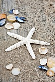 Starfish and seashells