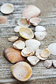 Seashells and sand on weathered wooden planks