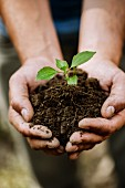 Man holding seedling and soil in cupped hands