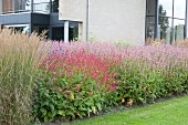 Flowering shrubs and ornamental grasses outside contemporary house