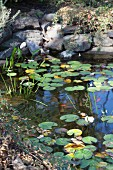 Garden pond with waterlilies and goldfish