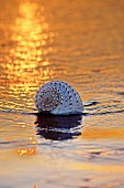 Seashell lying on beach in evening sun