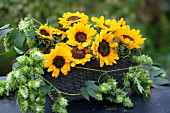 Basket decorated with sunflowers & hop tendrils