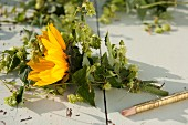 Tying sunflowers & hop tendrils with florists' wire