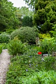 Gravel path leading through densely planted garden