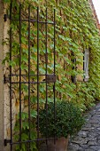 Wrought iron gate attached to vine-covered façade and potted plant on stone-paved path