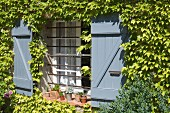 Vine-covered façade with pale blue wooden shutters on window with horizontal bars