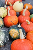 Various ornamental gourds and edible pumpkins
