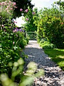 Flowering plants in summery garden with gravel path leading to ornate, metal garden gate