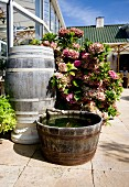 Wooden barrel with tap and tub in front of potted hydrangea on stone terrace outside conservatory