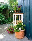 Verschiedene Blumentöpfe auf Terrassenboden und Vintage-Blumenständer vor blau lackierter Holzwand