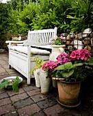 Pinkfarbene Hortensie im Topf neben weisser Holzsitzbank mit Polstern vor Gabionenzaun im Garten